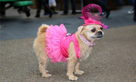 Paw Pageant - August 2014